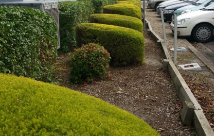 Commercial Hedge Trimming - MASTERPIECE GARDENSCAPES